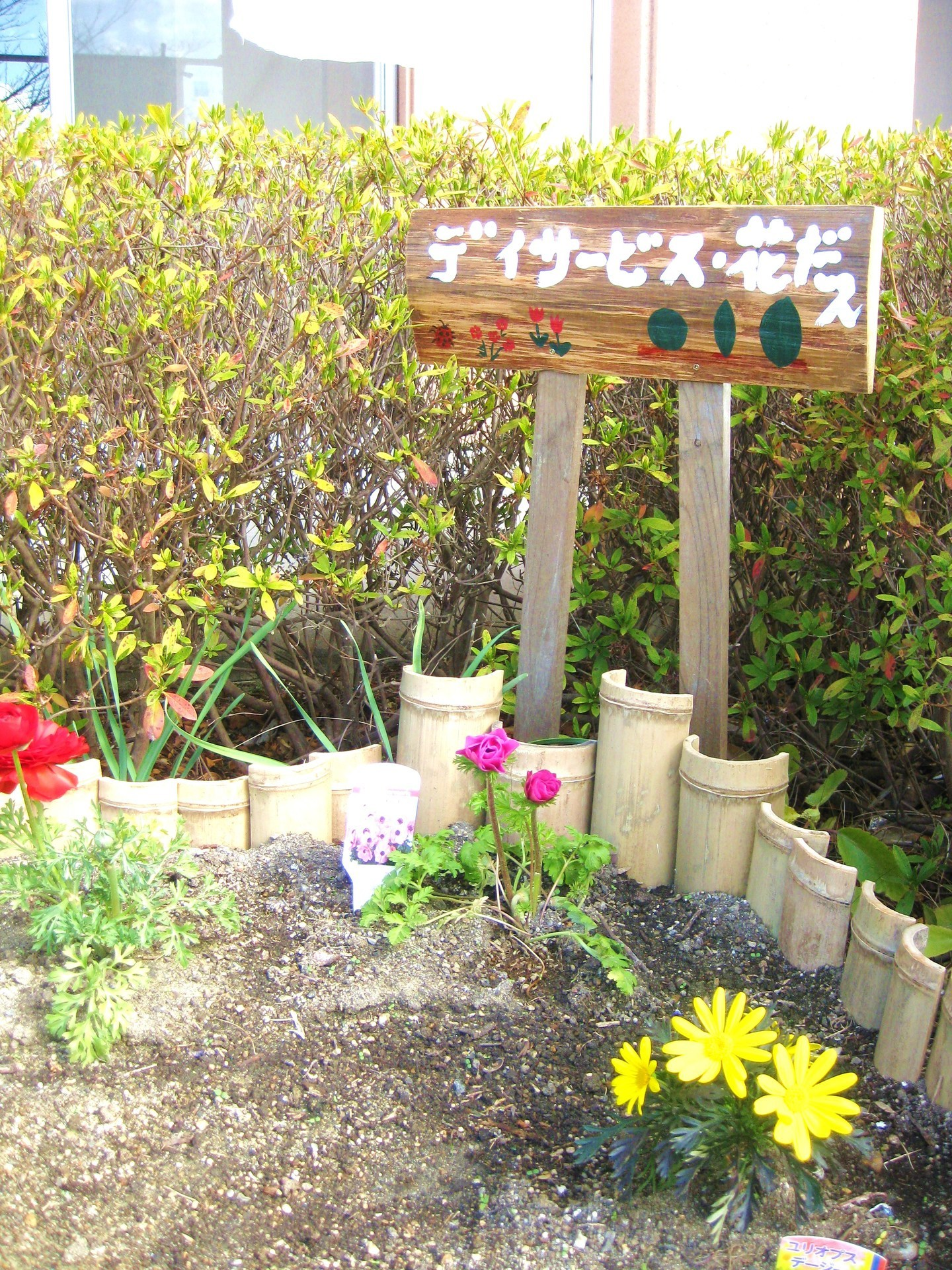 花壇 (2).JPG